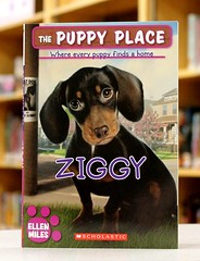 Ziggy (Vernon Barford School Library) Tags: new school fiction rescue dog pet pets dogs animal animals puppy reading book ellen high puppies place library libraries reads places books dachshund read paperback cover animalrescue junior novel series covers miles bookcover pick middle shelter vernon quick recent picks ziggy bookcovers paperbacks shelters novels dachshunds fictional animalshelter barford rescues softcover animalshelters quickpicks quickpick animalrescues vernonbarford 9780545253956