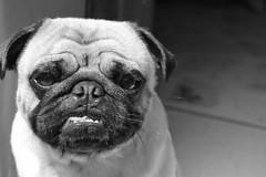 Canis (juanczuluaga17) Tags: hipbotunsquare