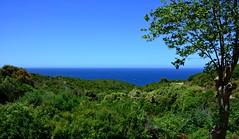 Vgtation dense (Diegojack) Tags: mer vacances corse porto paysages 2014