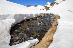 Laghetto delle Pigne - Valle Bedretto (Photo by Lele) Tags: switzerland ticino neve giugno acqua azzurro celeste ghiaccio laghetto novena 2014 leventina pigne bedretto