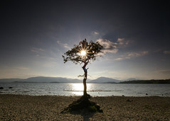 Millarochy Bay (Sue Langford) Tags: oak pentax bluesky lochlomond millarochybay pentaxk100dsuper may2014
