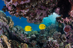 reefscape2_1920 (Andrey Narchuk) Tags: light fish color colorful underwater dahab redsea diving reef corals reefscape