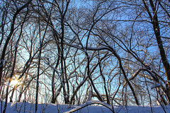Web of branches (lunarvogel) Tags: wood blue winter light shadow sky sun white snow black cold tree forest stem frost pattern bright russia bue web sunny freeze blanket trunk stick tangle deciduousforest bole interlacing coverlet delineation interweaving