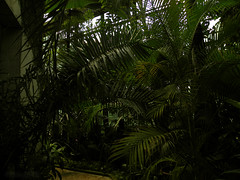 The greenhouse of Bucharest Botanical Garden (cod_gabriel) Tags: rainforest greenhouse romania jardimbotnico botanicalgarden bucharest hortusbotanicus bucuresti rumania romenia sera romnia bukarest roumanie jardnbotnico  ortobotanico boekarest bucarest romnia botanischergarten  romanya rumnien roemeni rumnien  rumana romnia gradinabotanica bucureti  bucharestbotanicalgarden rumunia ogrdbotaniczny  romnia botanisktrdgrd botanikbahesi  bucareste     rumunjska      grdinbotanic  dbrndz grdinabotanicdbrndz ser pdureecuatorial kebunbotani