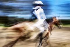 Endurance Ecuador (pajaropadron) Tags: caballos ecuador endurance