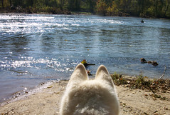 "Czar Is Enjoying the River View • <a style=""font-size:0.8em;"" href=""http://www.flickr.com/photos/96196263@N07/14552783804/"" target=""_blank"">View on Flickr</a>"