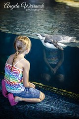 Making A New Friend (Angela Weirauch Photography) Tags: galveston water girl canon 50mm prime penguin aquarium texas moodygardens 6d canon6d