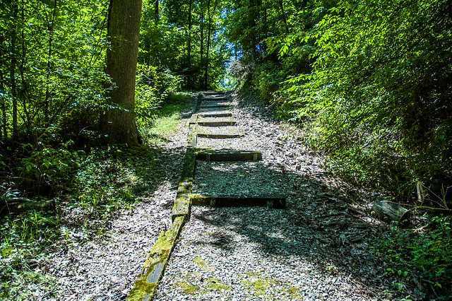 Selmier State Forest - July 17, 2014