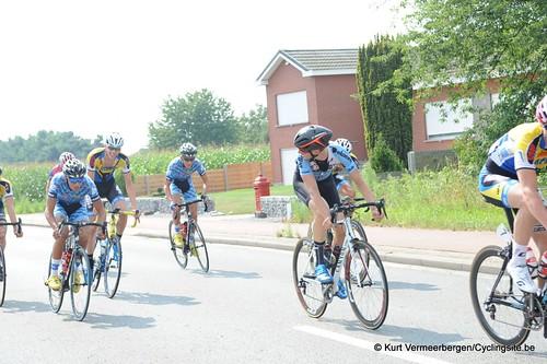 Geel Oosterlo  (50)