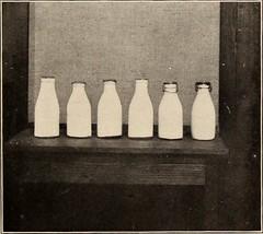 Anglų lietuvių žodynas. Žodis certified milk reiškia sertifikuoti pieno lietuviškai.