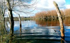 Isla Llicán (*paz) Tags: chile blue winter nature water rio isla ixregióndelaaraucanía llican teodoroschmidt