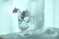 Let it snow (Kathy Chareun) Tags: death muerte vidrio glass white blanco viento wind mesa table ventana window luz light petalos movimiento move naturaleza nature sangre blood rouge rojo red rosas roses rosa rose flower flor flowers flores gente en la fotoañadir personas snow nieve winter invierno green verde