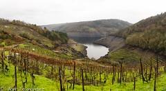 Vides e socalcos. (xanfer) Tags: castrocandaz encoro socalcos viñedo xillán galicia españa