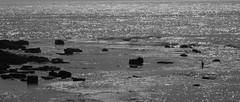 Lone Fisherman caught unawares (grannie annie taggs) Tags: beach sydney fisherman monavale
