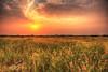 Glowing! (Ali:18 (علي الطميحي)) Tags: ريف غروب شمس مروج هروب الريث صبيا جيزان جازان السعودية غيوم sun sunset jazan jizan sabiya ksa saudi cloud lea saudiarabia countryside