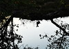 ,, Legs, Swamp ,, (Jon in Thailand) Tags: silhouette dog legs swamp jungle nikon nikkor d300 175528 ears tail nose trees reflection k9 pumpkin littledoglaughedstories