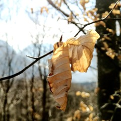Un ricordo d'autunno [explored] (Alessio Bertolone) Tags: autunno autumn foglie leaves leggerezza bosco woods tranquillity trentino it italy italia luce light trasparenza explored inexplore