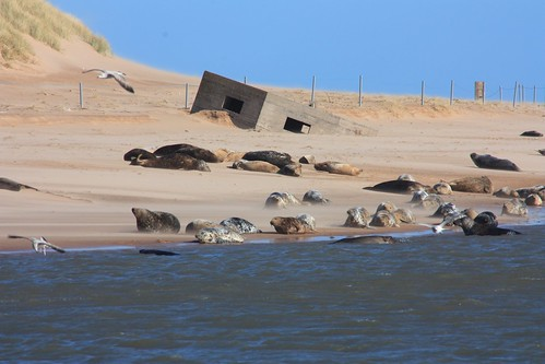NEA1-22 Basking Seals on Sands of Forvie.
