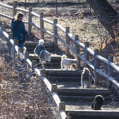 Dogs and walker on High Park stairs (jer1961) Tags: toronto highpark stairs parkstairs staircase dogs dog walkingdogs dogwalker