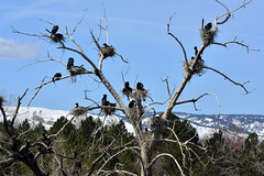 The rookery (Rocky Mountain Guy) Tags: lakewood co usa belmar