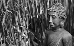 A Wish For Peace (AnyMotion) Tags: bamboo bambus buddha statue portrait porträt meditation peacefulness stille light licht 2016 frankfurt anymotion garden garten 7d2 canoneos7dmarkii spring frühling primavera printemps bw blackandwhite sw