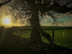 Sun, Sky and Lens Flare (Rae de Galles) Tags: fence drystone wall green grass evening golden glare lensflare sky skies sun nature nationalpark cymru wales iphone light trees mountain mountains breconbeacons brecon beacons dancingtree tree