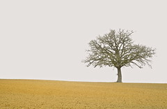 aridité hivernale (jean-marc losey) Tags: france aquitaine lotetgaronne astaffort arbre solitaire chêne silhouette hiver randonnée d700