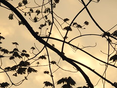 Leaves - 1 (GoldenEagle754) Tags: leaves silhouette sky yellow bright exposure outside outdoors lakemonticello fluvanna virginia branches trees light sunset