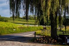 Walker Township, PA, USA (FriscoRose) Tags: pennsylvania amishcountry countryside farmland
