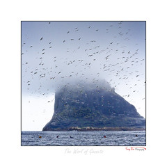 The World of Gannets_7131 (The Terry Eve Archive) Tags: stacanarmin stkilda gannets atlantic seakayakers kayak