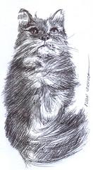 gato a lapicero (ivanutrera) Tags: draw dibujo drawing dibujoalapicero dibujoaboligrafo animal sketch sketching cat minino felino lapicero boligrafo gato gatito