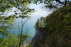 DSC09153 (Olaf Biedron) Tags: rügen buchen steilküste buchenwald baum tree steepcoast