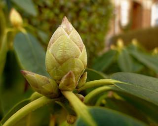 Le beau bourgeon - The beautiful bud