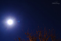 Full Moon & The Little Dipper (Felicia Brenning) Tags: full moon little dipper ursa minor luna light night stars tree tops nature sky long exposure sweden sony