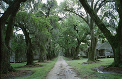 behind the big house (History Rambler) Tags: old antebellum plantation slave house live oak alley rural south film analog 35mm
