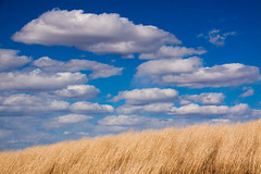 _MG_0634 - Western North Dakota plains.   ©Jerry Mercier (jerry mercier) Tags: nature nationalparks northdakota jerrymercier mercier canon plains prairie prairies grass grasses gold golden yellow orange wind windy blowing cloud clouds cloudy cumulus white blue sky skies bluesky outdoors theodorerooseveltnationalpark west western beauty beautiful land landscape landscapes scenic earth photo pictures colorful colors greatplains