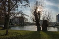 Suhl (Peter Goll thx for +11.000.000 views) Tags: 2017 suhl thüringen urlaub erlangen germany gegenlicht city stadt weide tree baum teich pond lake