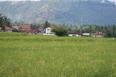 IMG_0172 (syafiqqzz) Tags: bukittinggi bukit tinggi padang west sumatra sumatera barat marapi singalang paddy