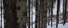 Hiking along the characteristic slope forests of Boersberg (B℮n) Tags: boersberg bos forest doorwerth castle rhine river kasteel footpath floodplains coif capful walking hiking arnhem veluwezoom anno1206 dorenweerd family impresive history snow winter uiterwaarden rijn musea wandelen fietsen struinpad heuvellandschap nederland holland netherlands old tree glorie medieval 12thcentury winterlandschap sneeuw sneeuwval portrait portret bonnet cap muts slee slede sleetje height hill climbing slope scale 50faves topf50