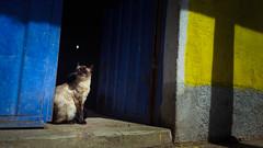 Sun shines for everyone (Boslok) Tags: cat sunny sunshine siamese sunbath relax ease cool chilling boslok bolivia copacabana southamerica sudamerica s6edge s6 samsung smartphone smartography mobile mobilephotography travel travelphotography gotravel triptravel trip ontheroad photojournalism