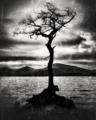 Lonely Tree (Impatient_Ruadh) Tags: tree lochlomond water grungeeffect blackandwhite monochrome mountains nature