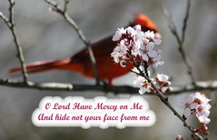 Psalms 27:7-9 (Mary Alice Bowles) Tags: northerncardinal hiding plumblossoms ourbackyard indiana psalms2779 explored 472017