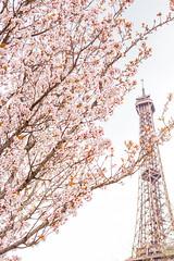 Blossoms & Eiffel (like / want / need) Tags: paris march spring printemps 7eme eiffeltower eiffel latoureiffel toureiffel flowers pink pinkflowers champsdemars