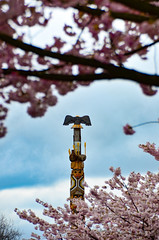 New beginnings (James_D_Images) Tags: reconciliation pole residential school tragedy cherry blossoms clouds sky first nations west coast