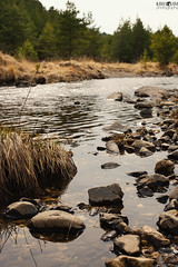 Mountain river (kana movana) Tags: serbia srbija spring river forest pines pine rocks rocky zlatibor mountain d800