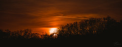 Line in the orange sky (Coisroux) Tags: sunset golden dusk silhouette treeline forest hues glowing panorama d5500 nikond sun clouds horizons flightpath glimmer glow ominous colorful vibrant warmth