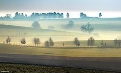 16032017-DSC_0033 (vidjanma) Tags: matin brume printemps arbres pastels