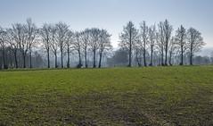 Monschau. Germany (Zinaida Belaniuk) Tags: monschau germany field spring