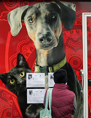 Dog and Cat (mikeallee) Tags: allee dogandcat