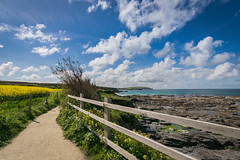 Coast path near Trevone (MooziX) Tags: coast path landscape beach summer beautiful warm warmth sky clouds blue ocean sea yellow green fence trail rocks cliff saturated nature explore wanderlust cornwall trevone